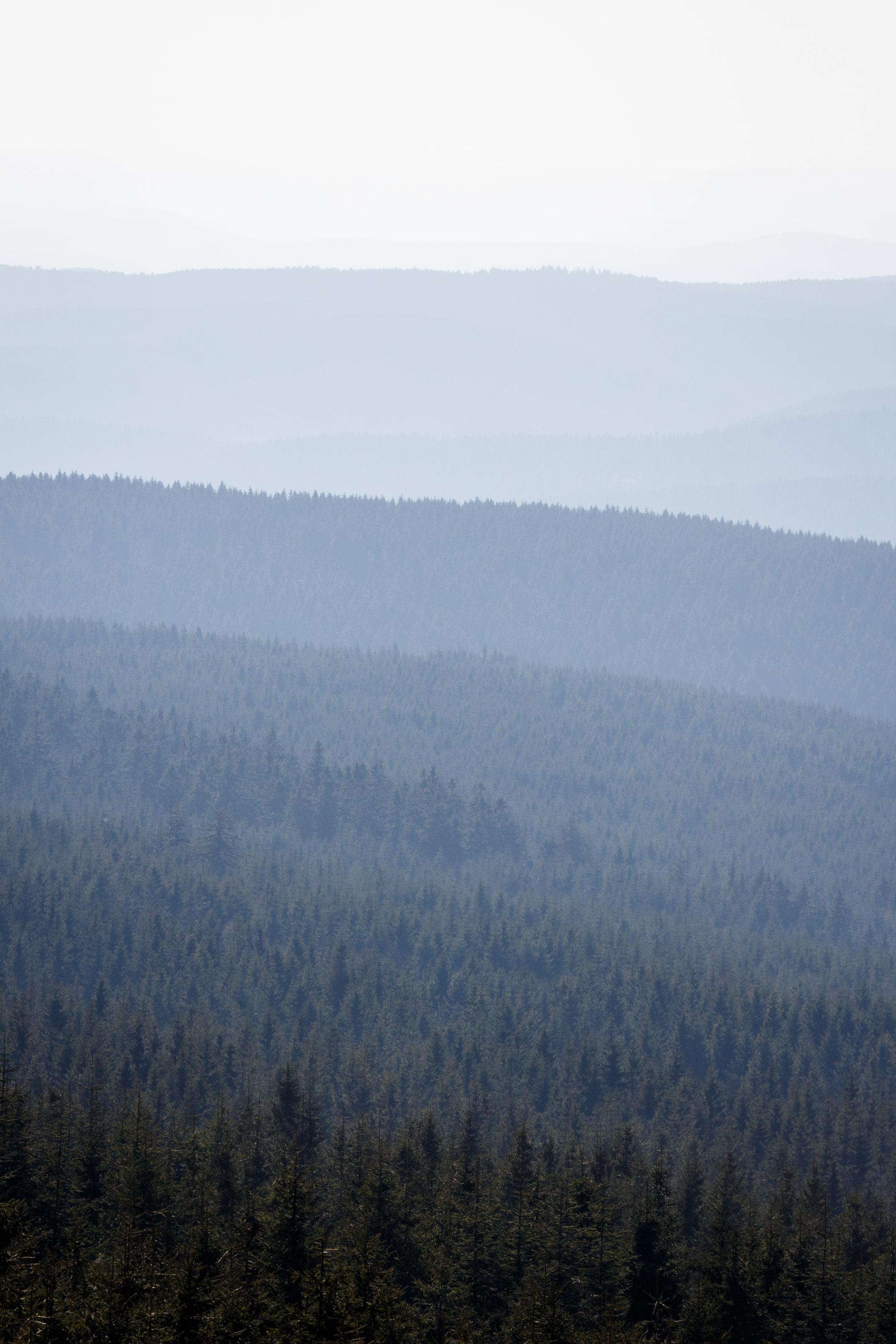 Es scheint so, als sein der Wald sehr kompakt