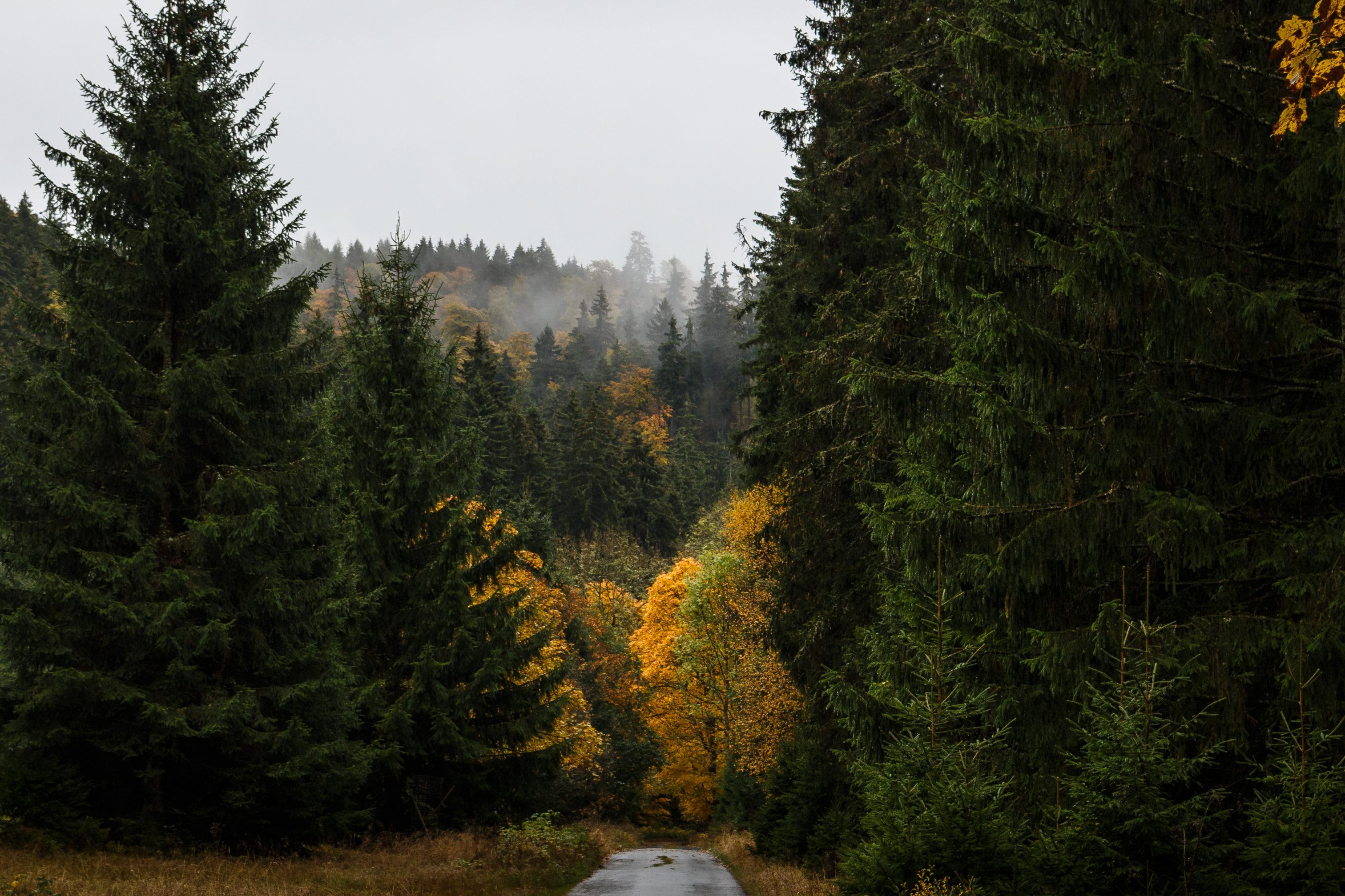 Im Herbst kann man, wie hier im Harz, eine Vielzahl an Farben einfangen