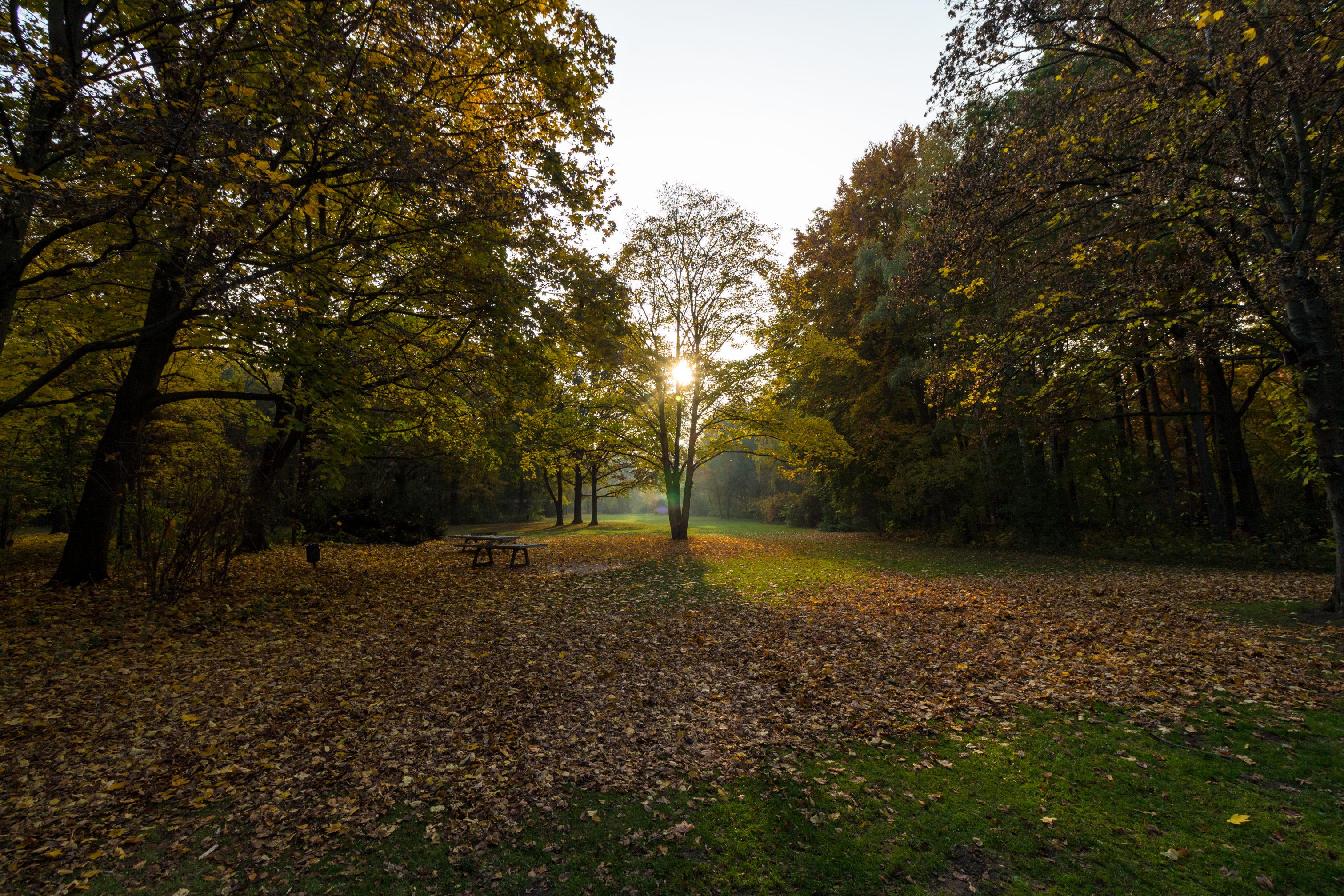 Natürlich lassen sich auch in der Stadt Herbstbilder aufnehmen, hier in Berlin