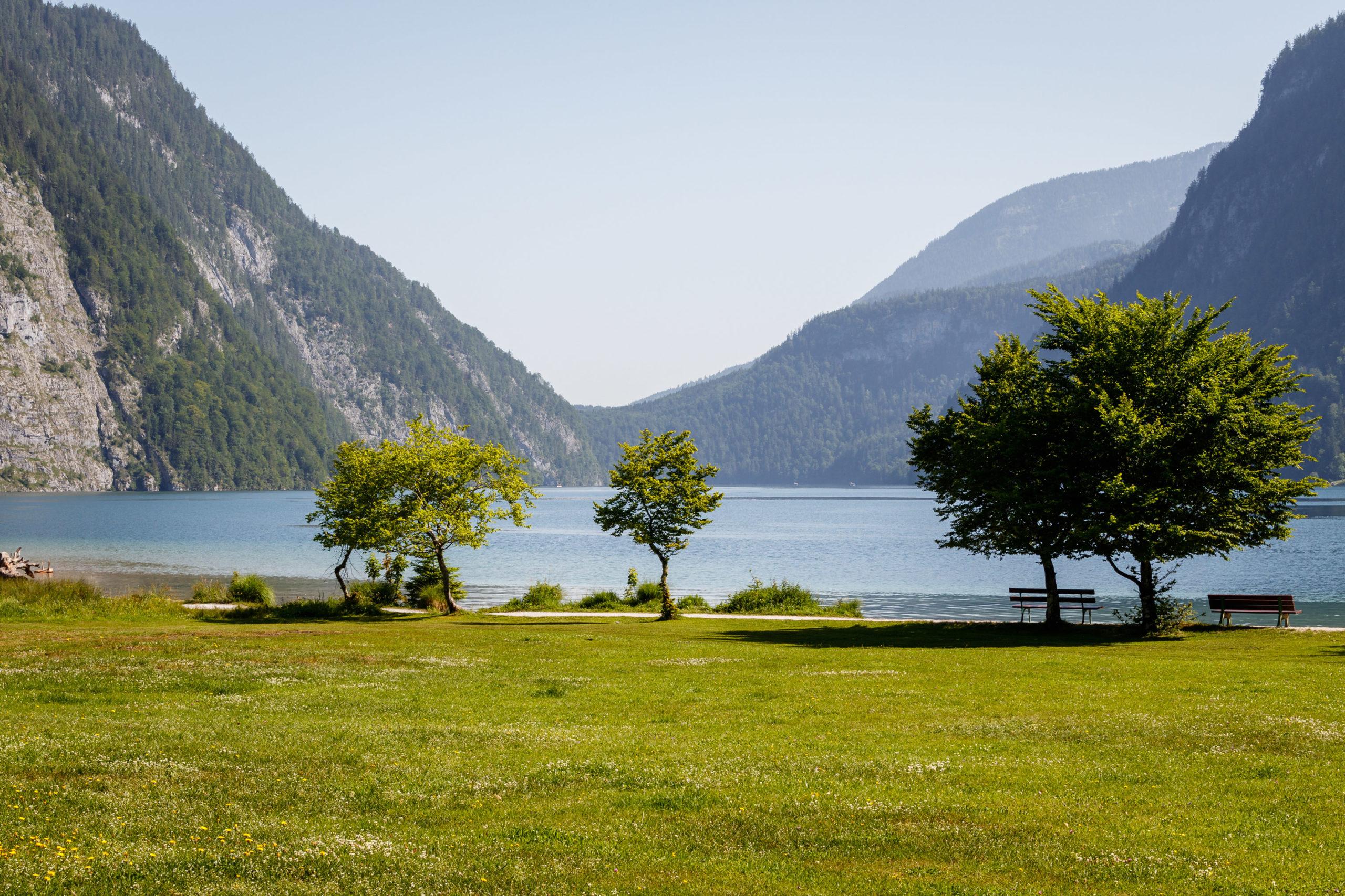 Eine Reihe Bäume an einem Bergsee